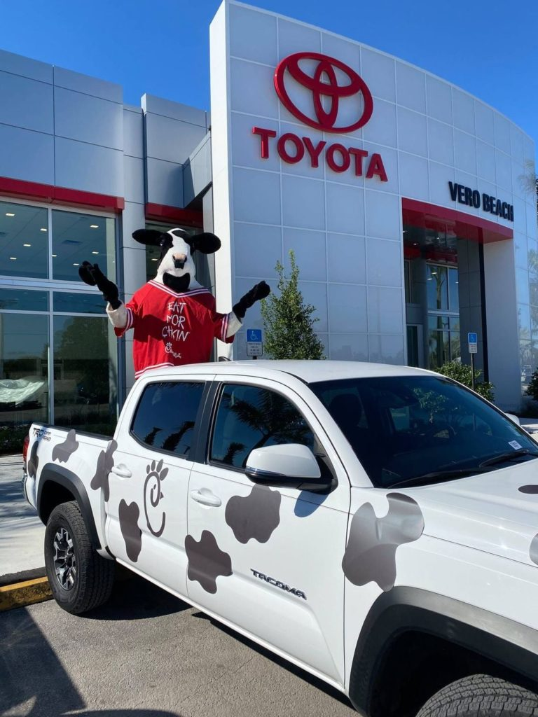 Chik-fil-a cow stands in the bed of a Toytoa Tundra pick up truck at Vero Beach Toyota to announce the opening of the Chik-fil-a cafe